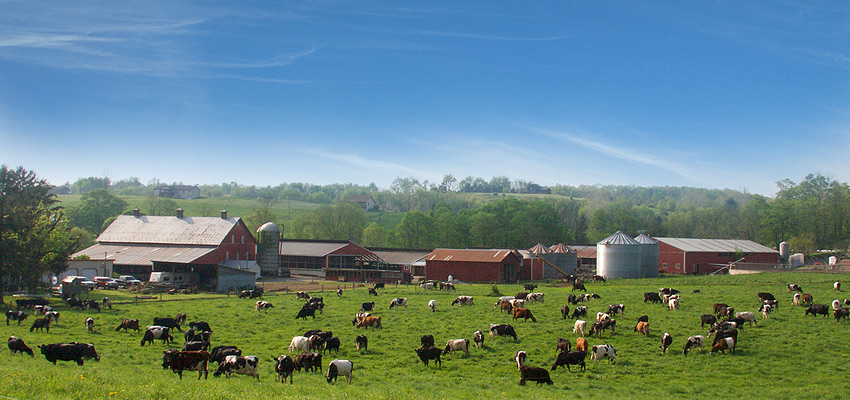 dairy farm image